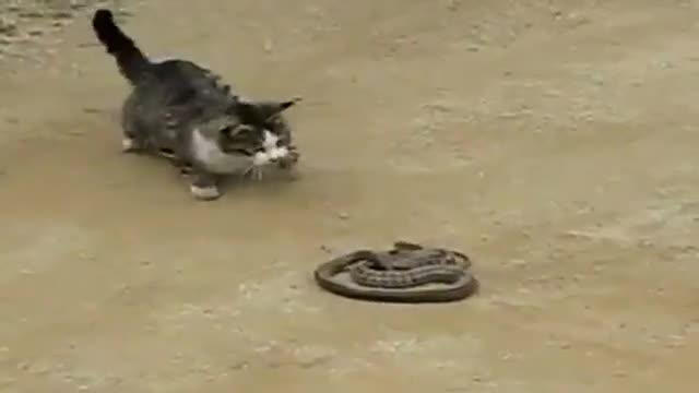 مار یا گربه ؟؟!